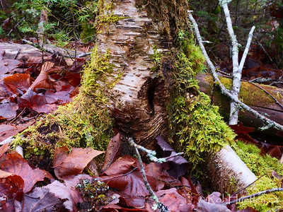 Tree trunk covered in moss.