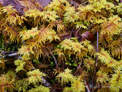 Moss on the Forest Floor