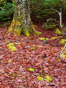 Forest floor with clumps of moss.