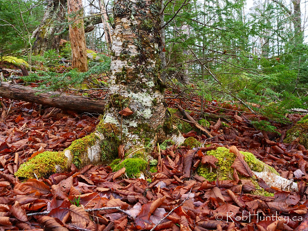 Tree with moss. Forest Floor