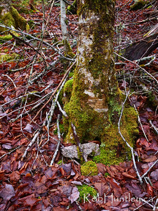 Tree trunk framed with twigs.