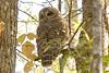 Owl_Wambaw_Creek