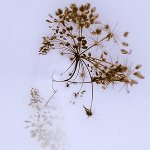Talventörröttäjät - Seeds of Winter