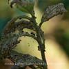 Luonnonpitsiä - Natural lace