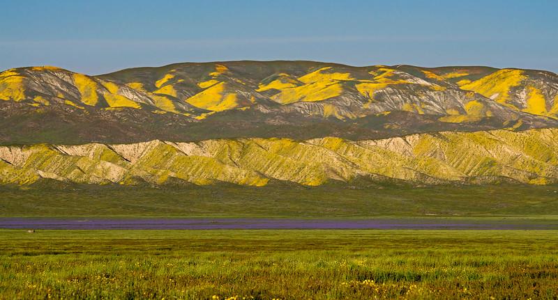 The Phacelia Field.  This massive bed of  flowers looks like a large purplish-blue lake on the plain.  It is a landmark on the maps.