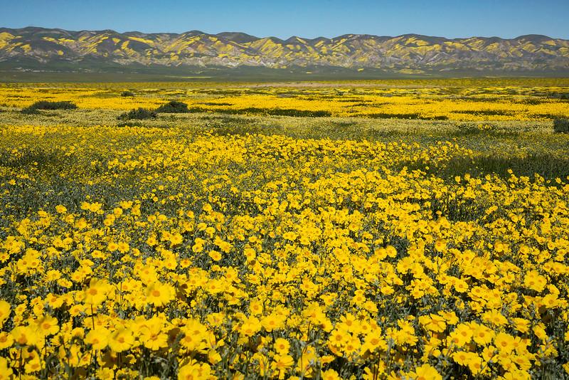 Carrizo  Plain and Temblor Range.