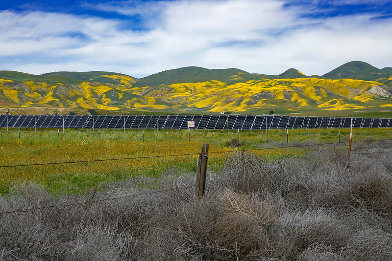 Solar farms are also spreading across unprotected areas of the Carrizo Plain, covering what had been grazing lands for pronghorn antelope and habitat for many other species.   There are large areas of abandoned junkyards and other degraded land nearby that could be used instead of destroying the natural areas.