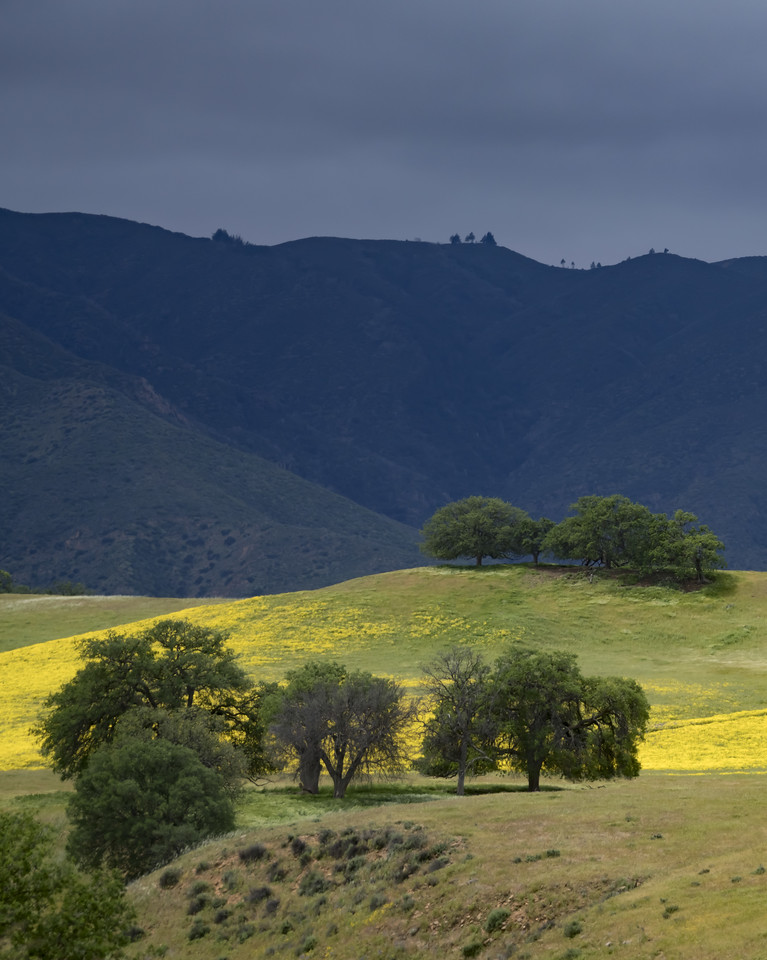 South of the Carrizo Plain