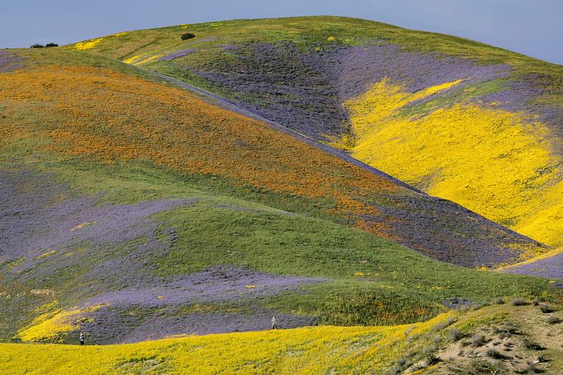 Temblor Hills, west slope, facing the Carrizo Plain.