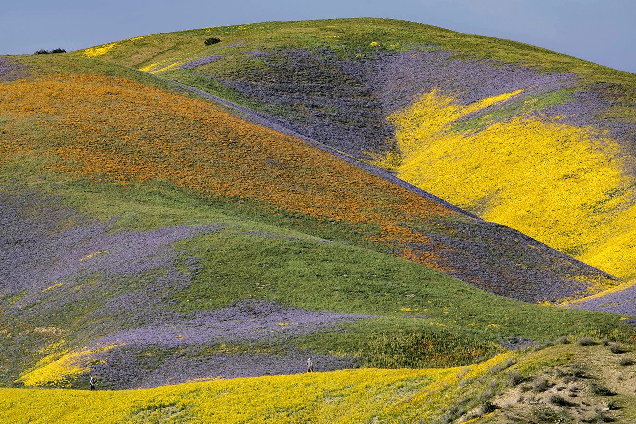 Temblor Hills, west slope, facing the Carrizo Plain.