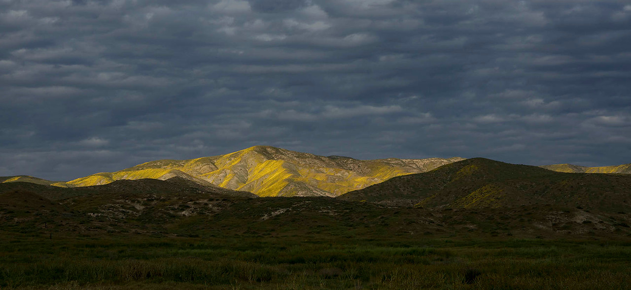 Flower covered southern Temblor Hills viewed from the Carrizo Plain.