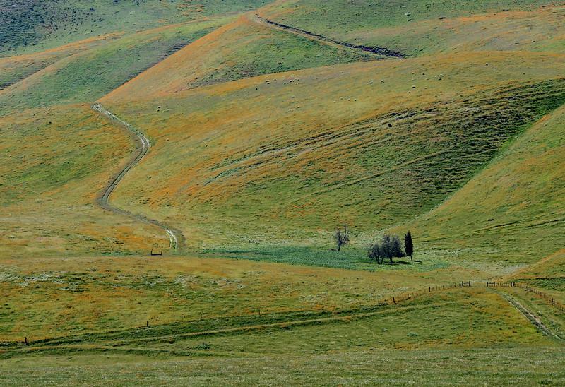Temblor Hills, east slope.