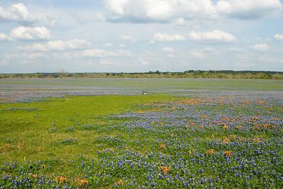 Wildflowers 2009-0260
