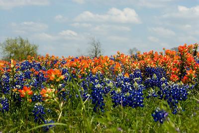Wildflowers 2009-0115
