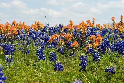 Wildflowers 2009-0117