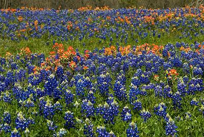 Wildflowers 2009-0110