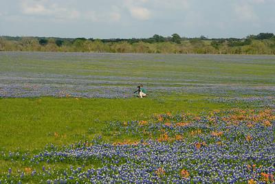 Wildflowers 2009-0261