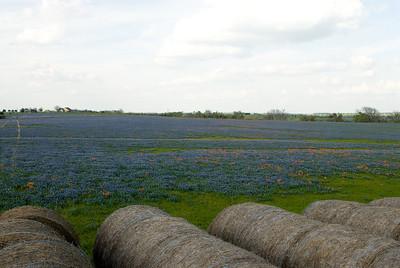 Wildflowers 2009-0291