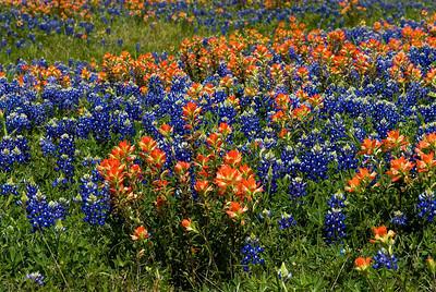 Wildflowers 2009-0111