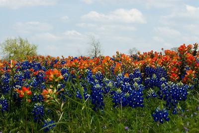 Wildflowers 2009-0114