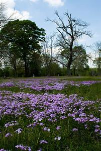 Wildflowers 2009-0148