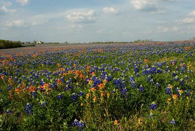 Wildflowers 2009-0244