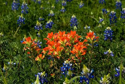 Wildflowers 2009-0229