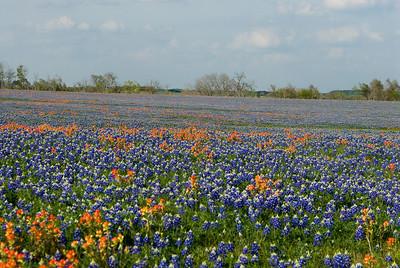 Wildflowers 2009-0262