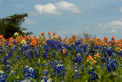 Wildflowers 2009-0122