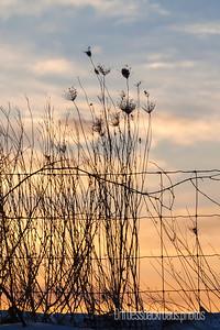 Wispy Weeds
