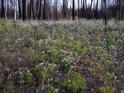 Wildflowers on Fox Creek