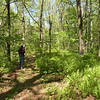 Kenny passing by the fern grove atop Brady Mtn along the CT <br /> TN