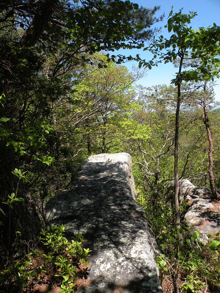 Donnelly's Overlook along the Cumberland Trail<br /> Brady Mountain TN