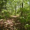 Cumberland Trail along Brady Mountain's spine TN