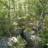 Lost Overlook.. the approach is interesting. More spots to jump from rock to rock. <br /> Cumberland Trail, Brady Mtn. TN