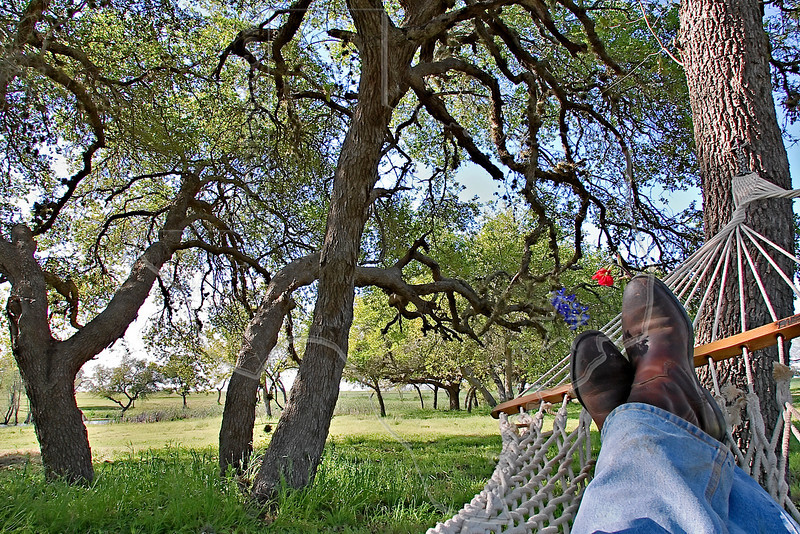 La Primavera - Oak Tree Therapy,<br /> Nordheim, DeWitt County, Texas