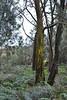Royal Botanic Gardens, Cranbourne