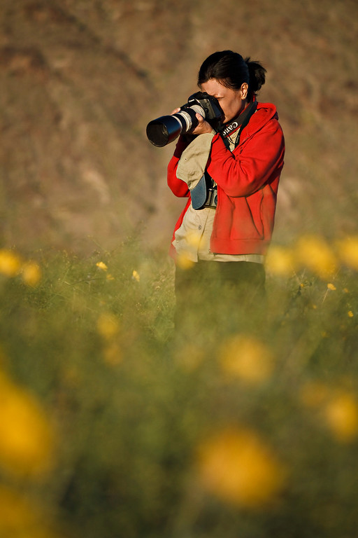 """Photographer Anna Jison capturing the sun as it backlights the flowers. Her Anza-Borrego desert galley can be found at   <a href=""""http://www.annajisonphotography.com"""">http://www.annajisonphotography.com</a>"""