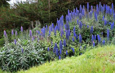 4679 Blue Flowers 2