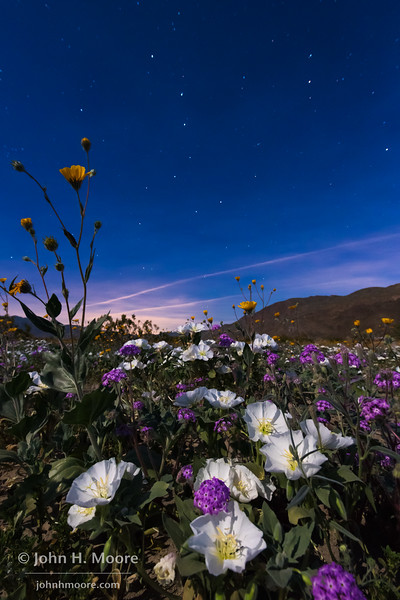 The Big Dipper watches over a field of wildflowers at Anza-Borrego Desert State Park.