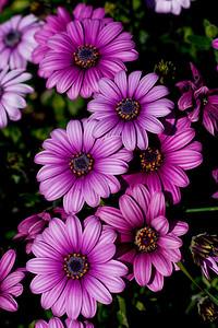 0860 Flowers