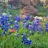 Captured this shot at Inks Lake State Park. One of the many state parks in Texas laden with wildflowers in the spring.