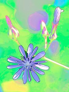 Blue Lettuce