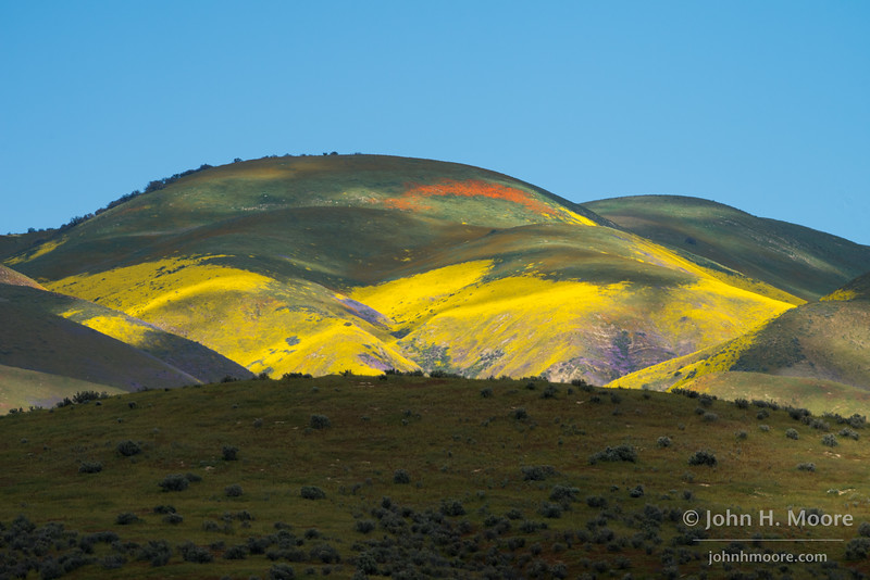 Spring colors cover the hillsides in the Temblor Range of Carrizo Plain National Monument.