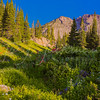 Albion Basin Wildlowers