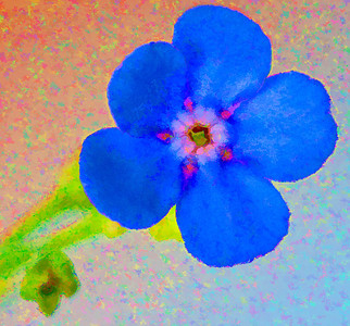 Forget-me-not  06 14 09  010 - Edit