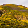 A painted hillside in the Temblor Mountains in Carrizo Plain National Monument