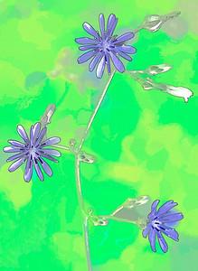 Blue Lettuce  08 29 08  005 - Edit CS4 - Edit - Edit
