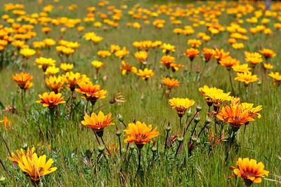 1926 Fremont Flowers