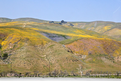 Color from spring wildflowers on the hills along the grapevine.